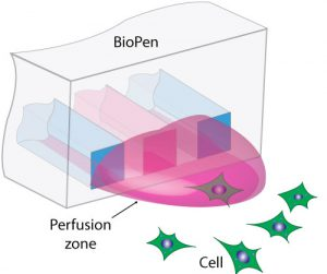 Drawing of BioPen delivering solution to single-cell