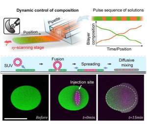 dynamic control of bilayer composition using biopen